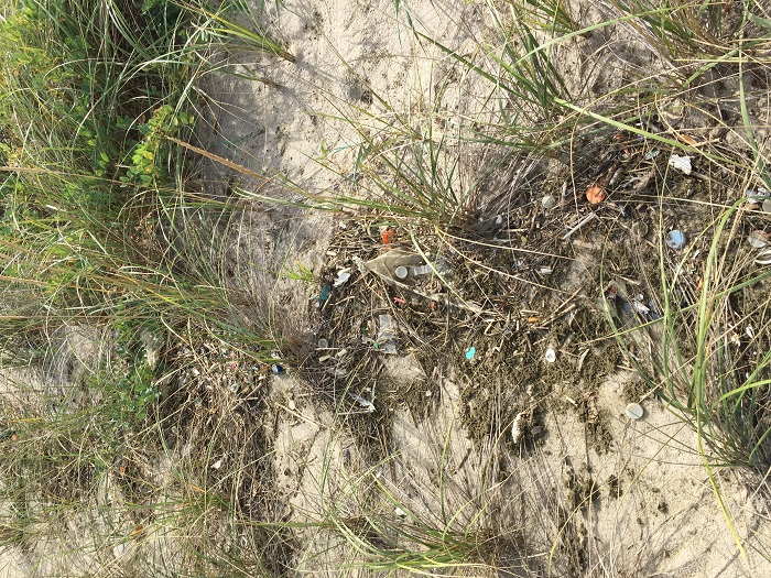 Litter in the dunes at our YNA Gunnison Beach Cleanup