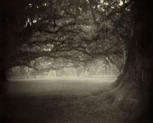 sally mann photographer southern landscapes felicitys blog