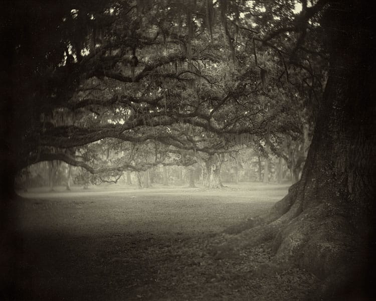 Southern landscapes by Sally Mann